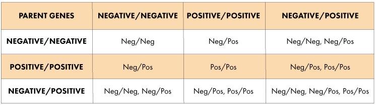 Blood Type Genetics