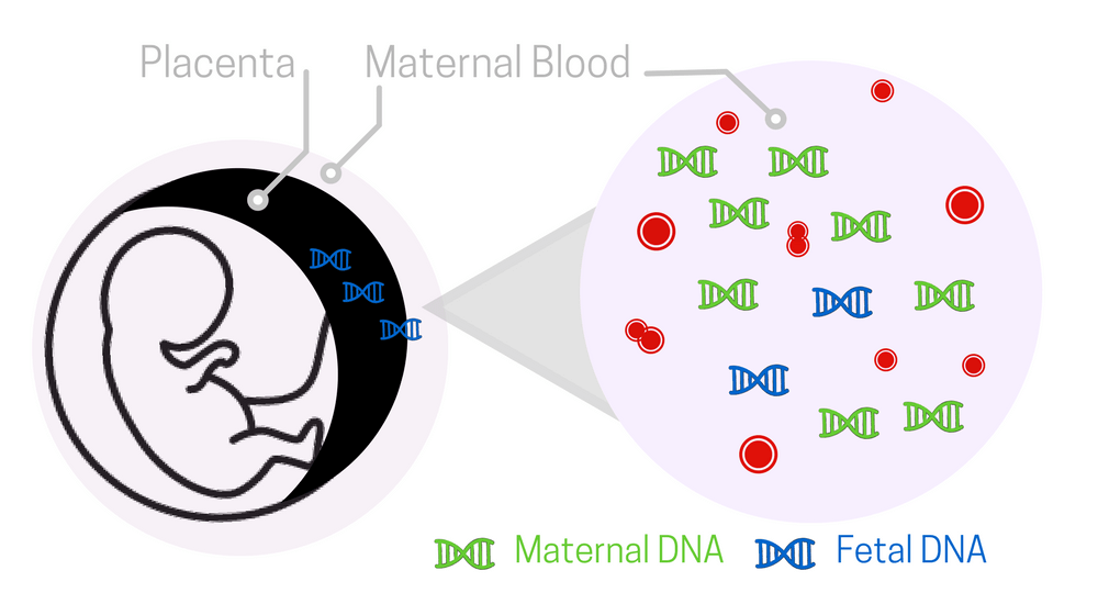 Third-trimester prenatal tests